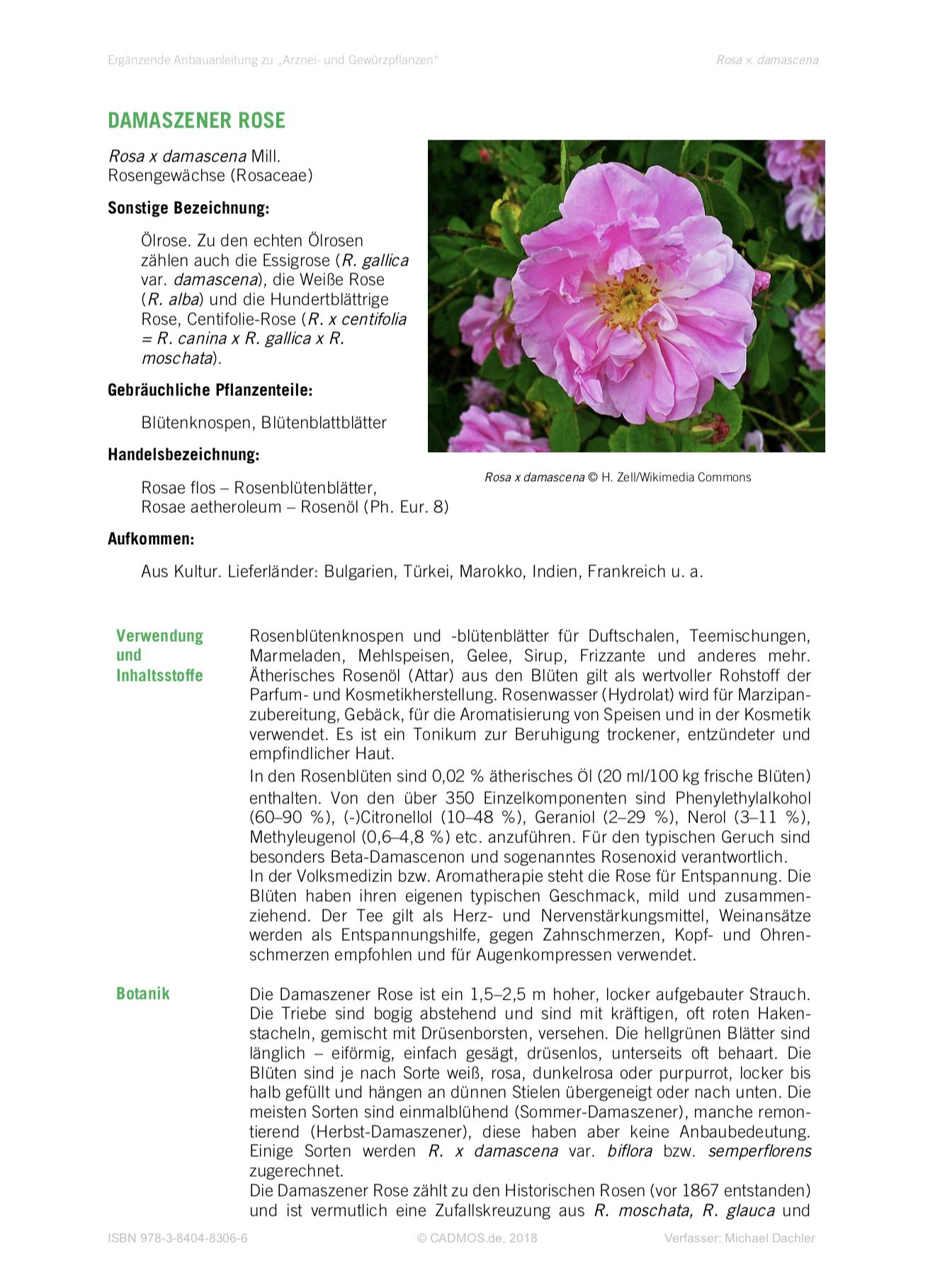 Anbauanleitung Damastener-Rose (Rosa x damascena)