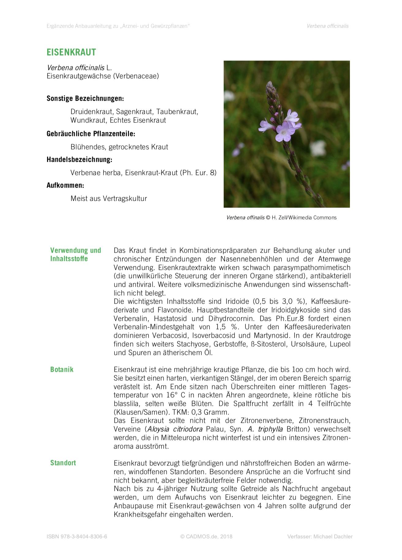 Anbauanleitung Eisenkraut •Verbena officinalis