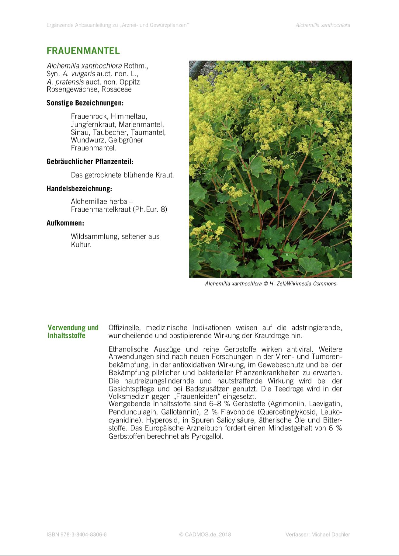 Anbauanleitung Frauenmantel •Alchemilla xanthochlora
